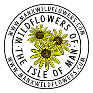 Wildflowers of the Isle of Man